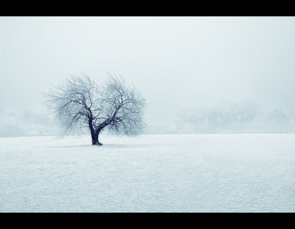 Day 179, 179/365, Project 365, white out, whiteout, tree, field, lonely, snow, ice, white, blue, bluish,