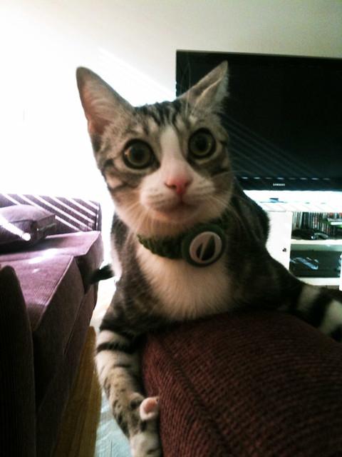 Envato Cat!