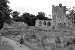 Masters Walk (Mic_Hay) Tags: ireland dog white black abbey walk wexford tintern