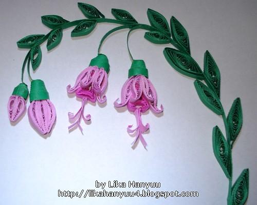Fuchsia Hybrida v1