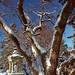 Cincinnati - Spring Grove Cemetery & Arboretum Snow-Capped Branches