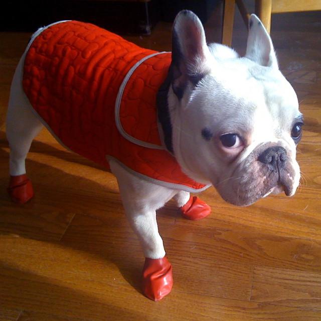 red coat po