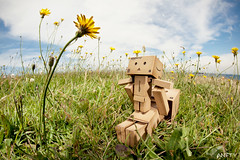 Life Is Beautiful (Antty+) Tags: flowers sun flower toy happy is singapore you box before it gone boring mo cardboard hardcore around anton ang everything joyful carefree appreciate tang kio danbo delighted danboard danboru antty