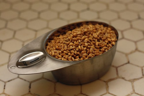 wheat berries, one cup
