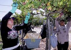 San Juan: No hubo acuerdos en las paritarias vitivinícolas