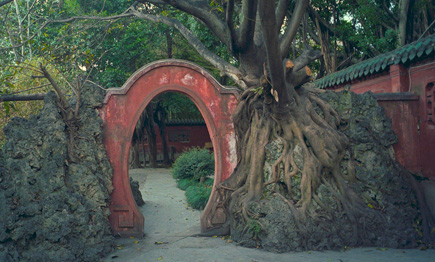 Gate built around large tree