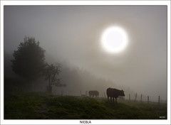 Fog (Jabi Artaraz) Tags: naturaleza nature animal fog fauna amazing spain europa europe gorgeous natur natura zb lovely niebla spanien vacas baskenland 1000views biskaia animaliak lainoa beautifulearth digitalcameraclub supershot 100faves 1000vistas biskaya euskoflickr fineartphotos fantasticnature abigfave superaplus aplusphoto flickrbest impressedbeauy diamondclassphotographer flickrdiamond excapture jartaraz bestofblinkwinners blinksuperstars