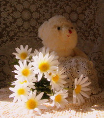 Miss Daisy (Javcon117*) Tags: bear county light sunlight stuffed md day teddy natural lace maryland valentine valentines doily cumberland available allegany javcon117 frostphotos art435