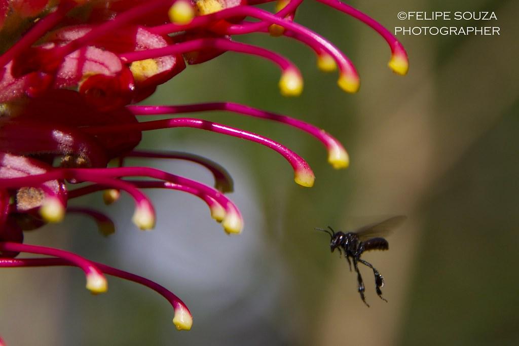 Bee & pollination