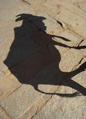 Inde, vache sacrée (Michel Etter) Tags: street shadow india art animal painting poster fineart ghost ombra dessin ombre shade tableau animaux rue mur bovine rocher lascaux sacré vache inde ombrechinoise vaches artmural ombres artistique cromagnon taureau 黄色 préhistoire ombreetlumière umbra zébu paléolithique photoartistique photodart photonumérique néandertalien laplusvieilleénigmedelhumanité