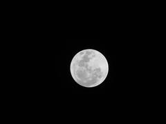 No encuentro al conejo!! (Naiknatt) Tags: travel viaje moon méxico canon luna powershot fullmoon lunallena veracruz xalapa