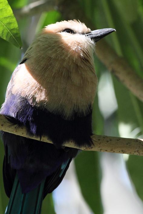 020611_zoo_bird12