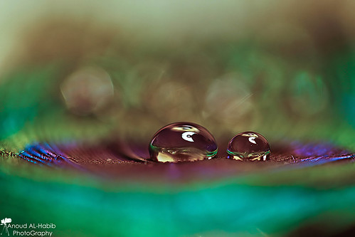 [ 1\3 ] ( Anoud Abdullah AlHabib) blue red macro green water colors canon eos drops all purple super right reserved 500d
