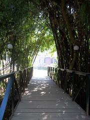 100_0168 (travellersai) Tags: kerala treehouse wayanad teaestate wildboar bandipur chital vythri banasuradam soojiparafalls streamvalleyresorts