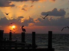 Early Risers (zoniedude1) Tags: ocean morning travel sky sun seagulls beach nature beautiful clouds sunrise mexico dawn coast yucatan playa pelican atlantic adventure explore amanecer exotic bonita tropical caribbean nophotoshop exploration mayanriviera silhouttes marcaribe quintanaroo puertomorelos buenosdias salidadelsol flickrsbest zoniedude1 amomxico mxicohermoso canonpowershotg11 earthnaturelife cloudsstormssunsetssunrises yucatan2011 plma2011