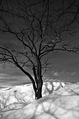 Barely~ (ruthiedee) Tags: winter blackandwhite bw snow tree lines shadows curves explore gloucester lightandshadow barebranches gloucestermass explorefeb222011