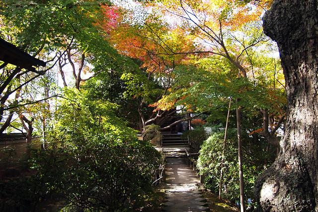 20101116_122431_新薬師寺_織田有楽斉の庭