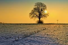 Ein Kalter Morgen auf der Alb IV (Franz Neuhusler) Tags: alb der iv auf sonnenaufgang morgen baum ein schwbische kalter d700
