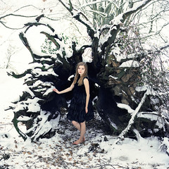 http://web.me.com/maryanne_james/ (Mary-Anne James) Tags: old snow tree bird fashion fairytale dress roots feather medium format ravan