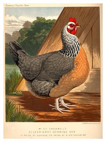 014-The illustrated book of poultry. With practical scheduals…1890-Lewis Wright