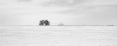 15520c (Chungking Express) Tags: trees winter blackandwhite white snow cold field wisconsin nikon horizon desolate d40 horiconmarsh 18200mmf3556gvr lightroom3