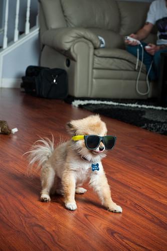rad pup