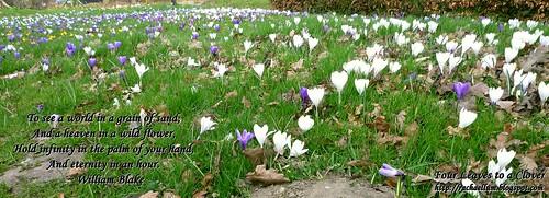 Spring by rachlyf