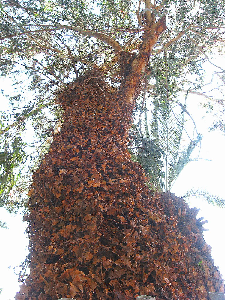 12-03-2011-leaftree