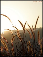 Dreamy... (D a r s h i) Tags: morning light golden dreamy pune pldeshpande olyumpussp565uz