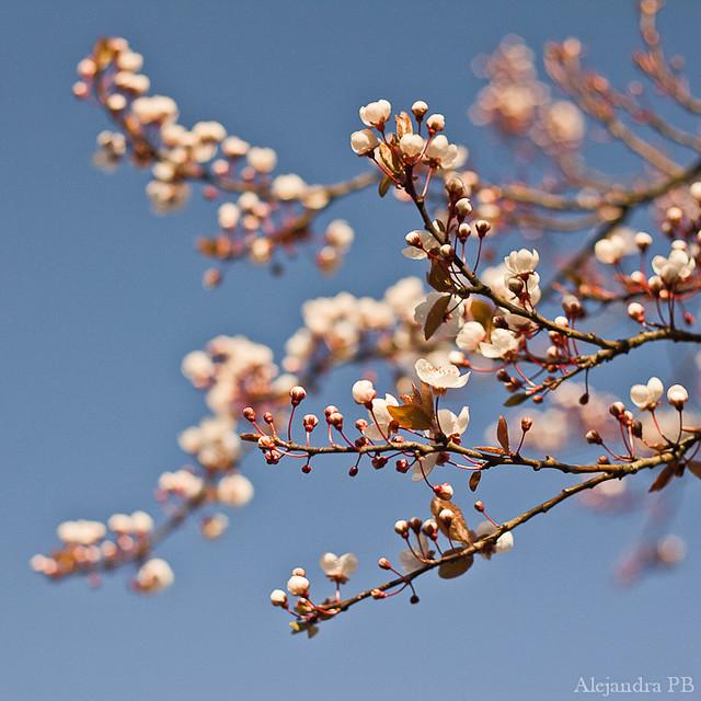 Detalles de primavera