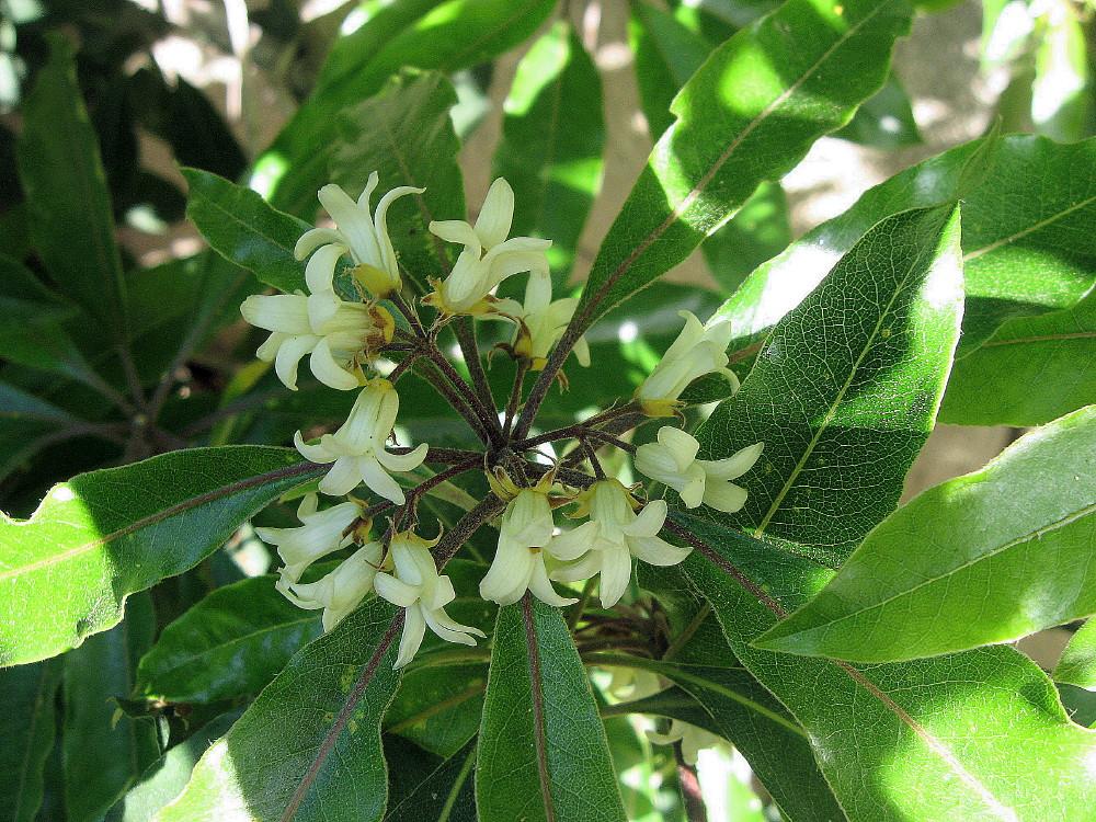 19-03-2011-flower-fantastic-scent