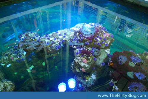 california-academy-of-sciences-tidepool-exhibit