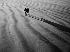 (kittensquirrel@rocketmail.com) Tags: ireland light shadow dog beach nature monochrome landscape delete5 delete2 save3 delete3 save7 save8 delete delete4 save save2 save9 save4 save5 save10 save6 savedbydeletemeuncensored challengeyouwinner thechallengegame challengegamewinner