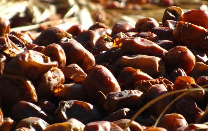 Egyptian Siwa Dates