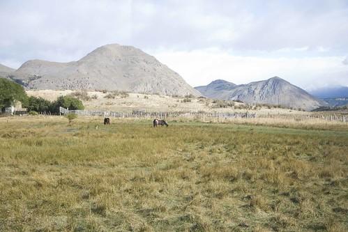 Caballos near Nahuel Pan La trochita b