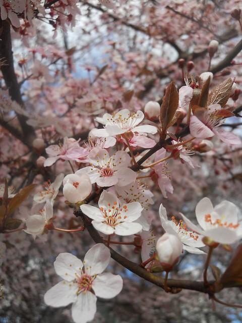 spring2011 061