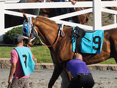 Danly's Dream (avatarsound) Tags: boston suffolkdowns horse horseracing jockey race racetrack racing