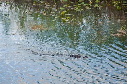 Everglades-33
