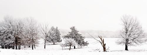 Hoar frost 12