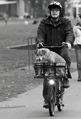 A Saturday Ride (Ian Sane) Tags: park street dog white man black bicycle tongue tom oregon river portland ian photography downtown basket waterfront ride candid saturday governor headlight doggie willamette sane mccall a