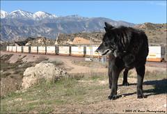 Farewell to the Holloran Dog - January 29, 2011.