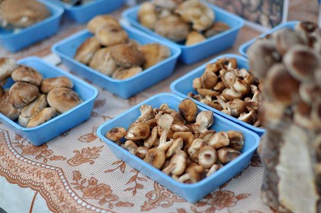 Market mushroom blue