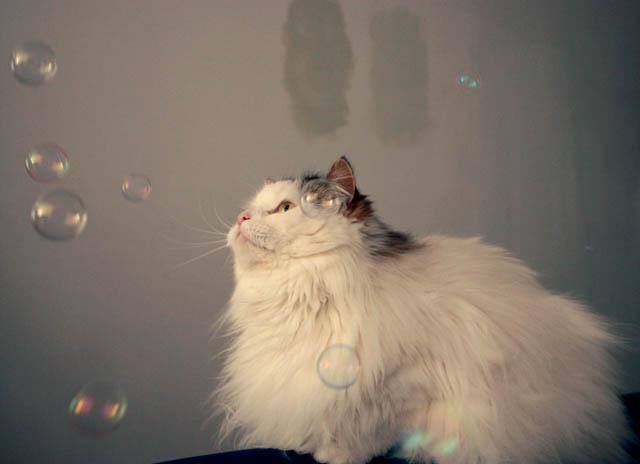 lou lou bubbles d