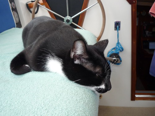 lazy tucker