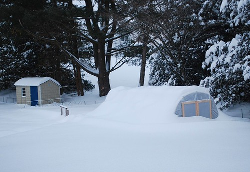 snow covered hoop house