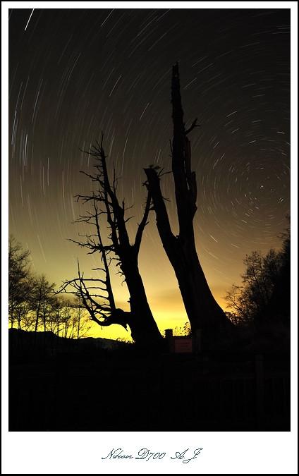 阿里山--隙頂,夫妻樹