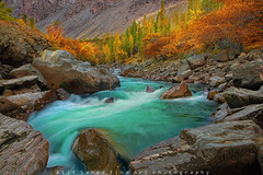 Colors Brust.. (M Atif Saeed) Tags: autumn trees pakistan mountain mountains tree fall nature water yellow creek river landscape rocks stream foliage karakoram northernareas slowmotion skardu atifsaeed