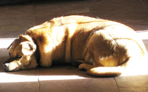 Pressing concerns of the family dog - where's my sunny spot?