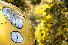 ( (brunomdl) Tags: auto france car yellow jaune nikon fiat cannes ctedazur paca amarillo giallo coche provence 500 mimosa francia fiat500 frenchriviera provencealpesctedazur d300s