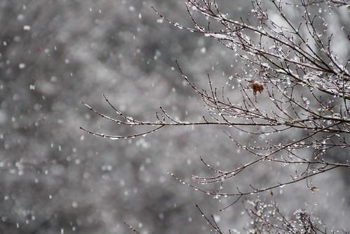 降雪 - 高速シャッター
